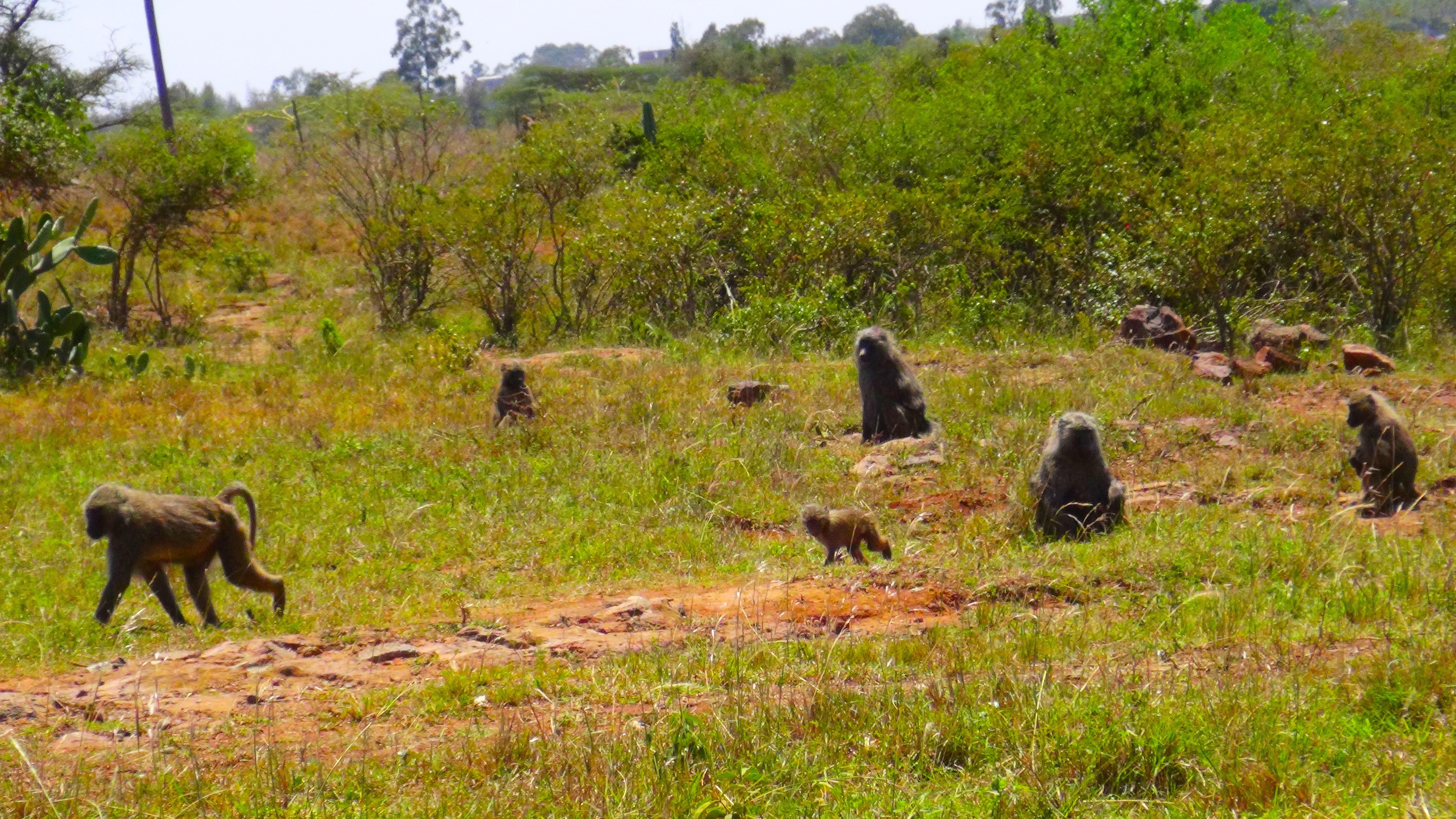 Toute une famille de singes