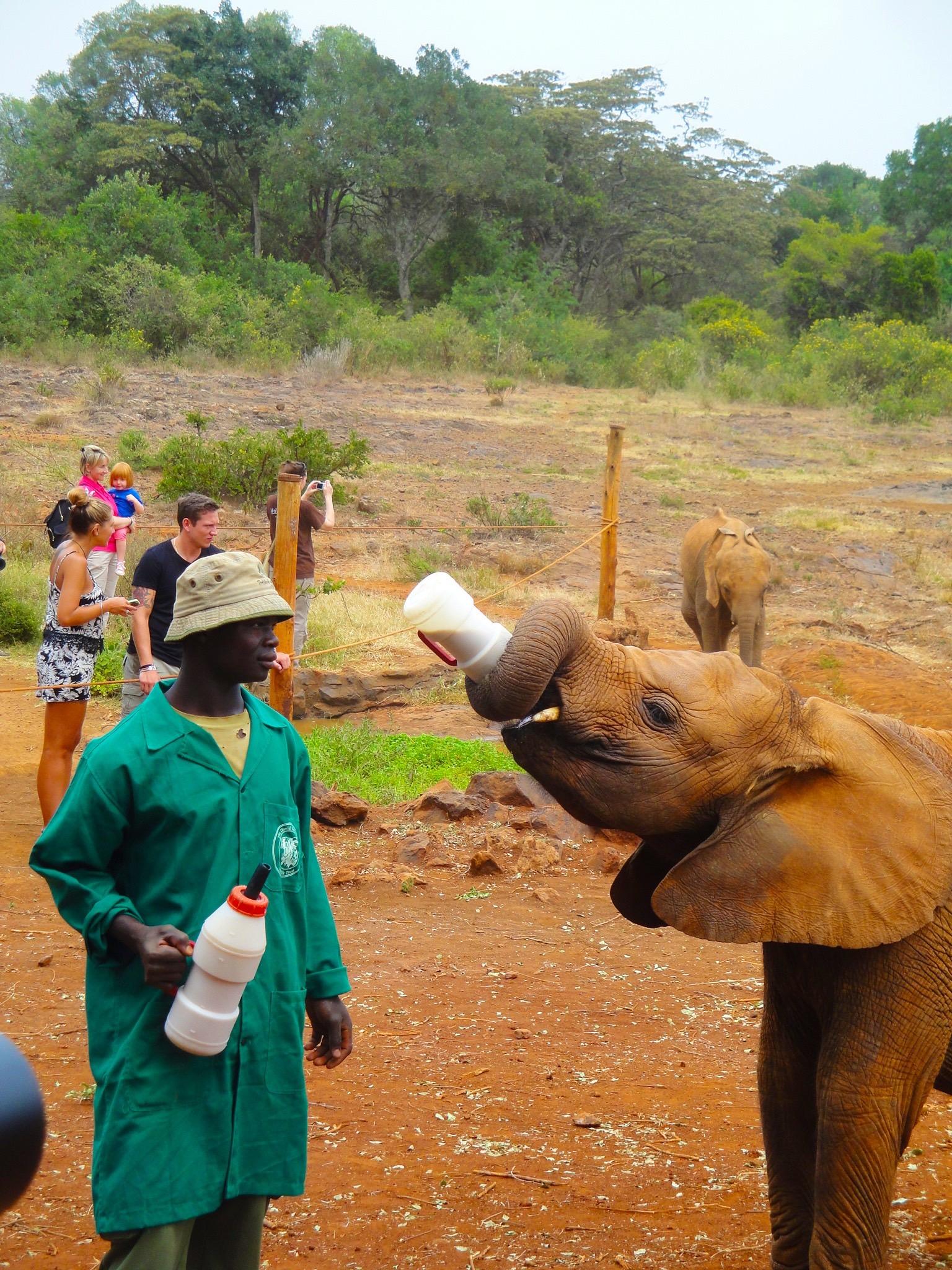 Elephant Orphenage – Nairobi