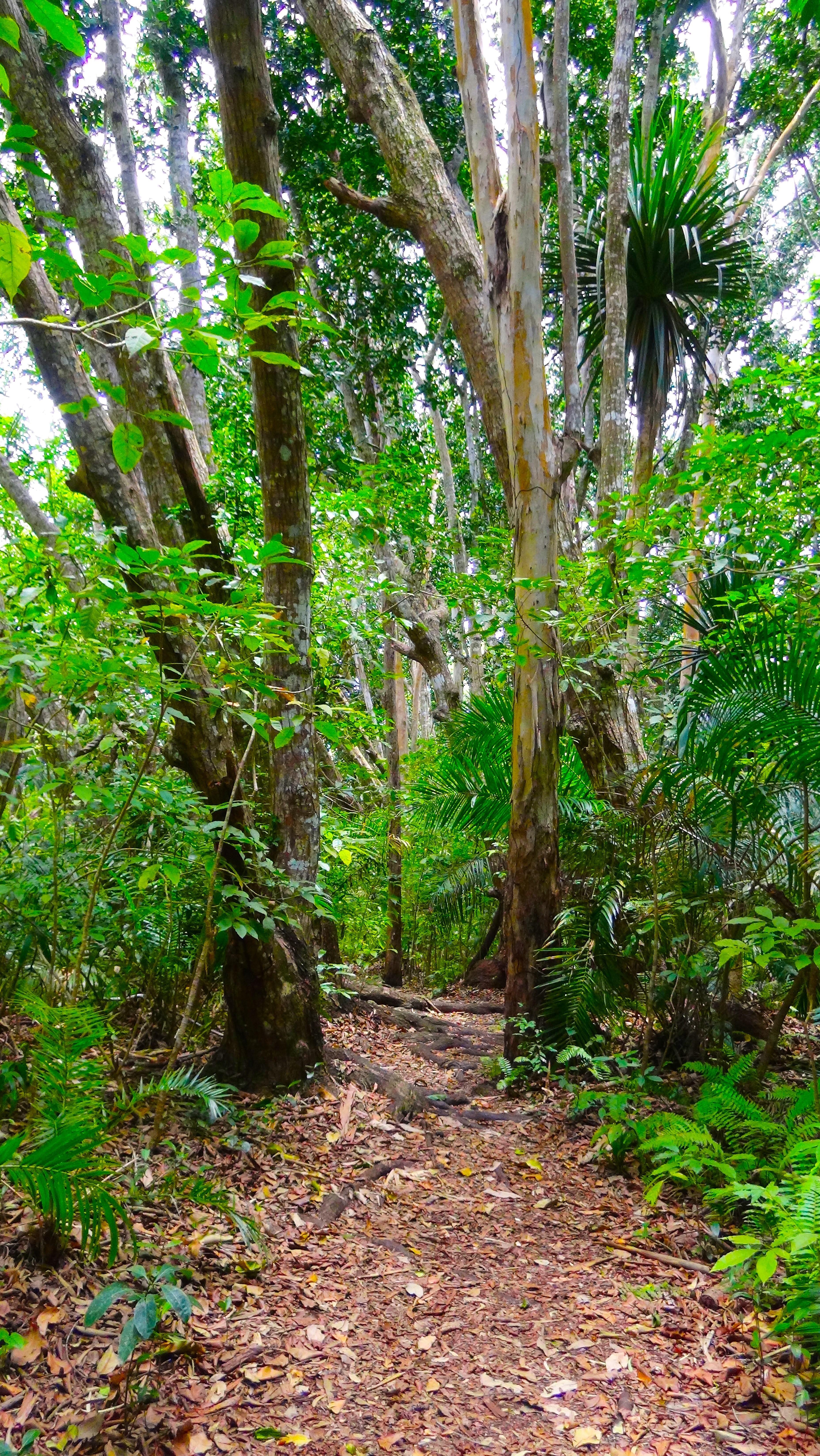 Zanzibar – Jozani Forest