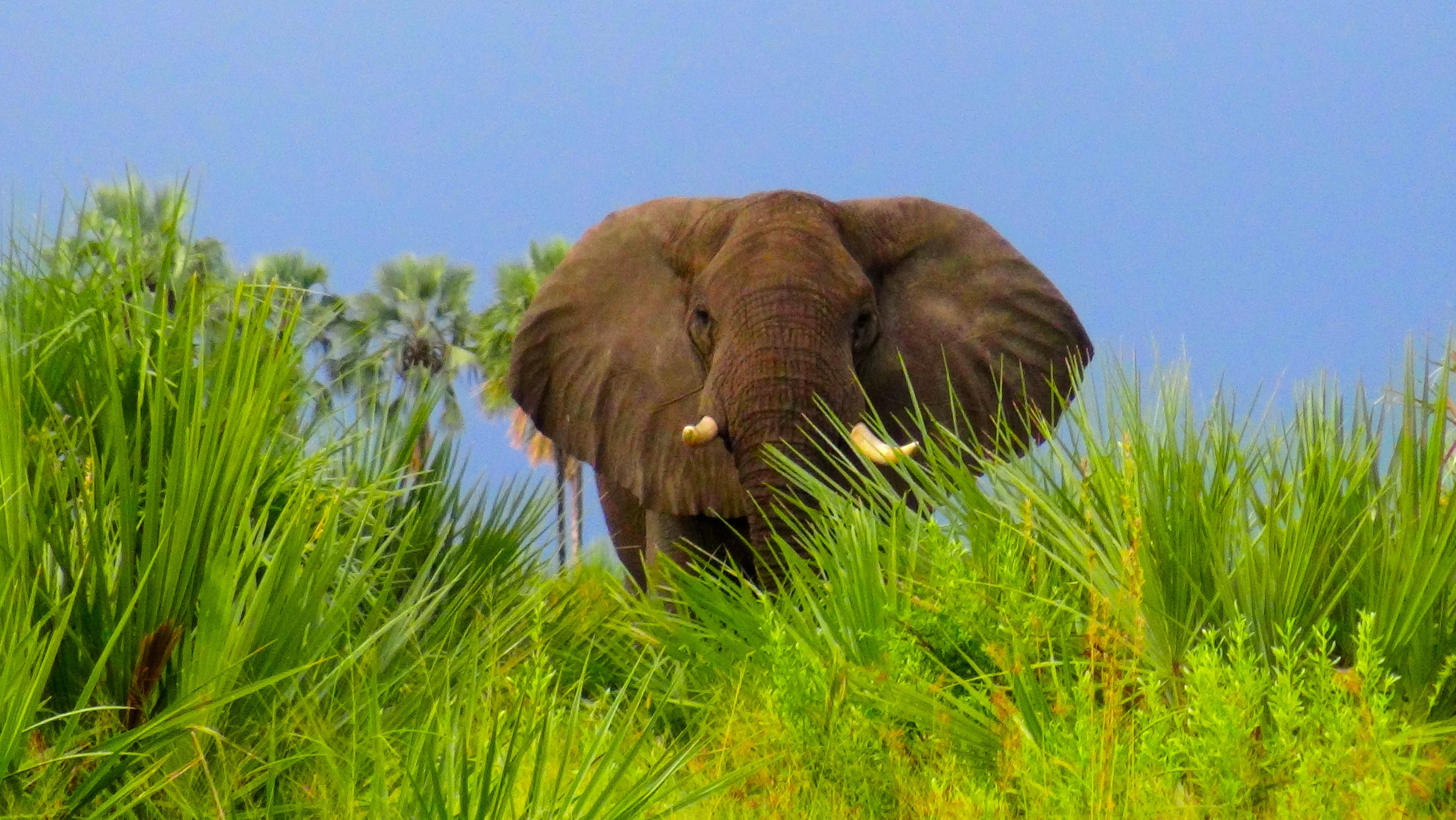 Faire face à un éléphant