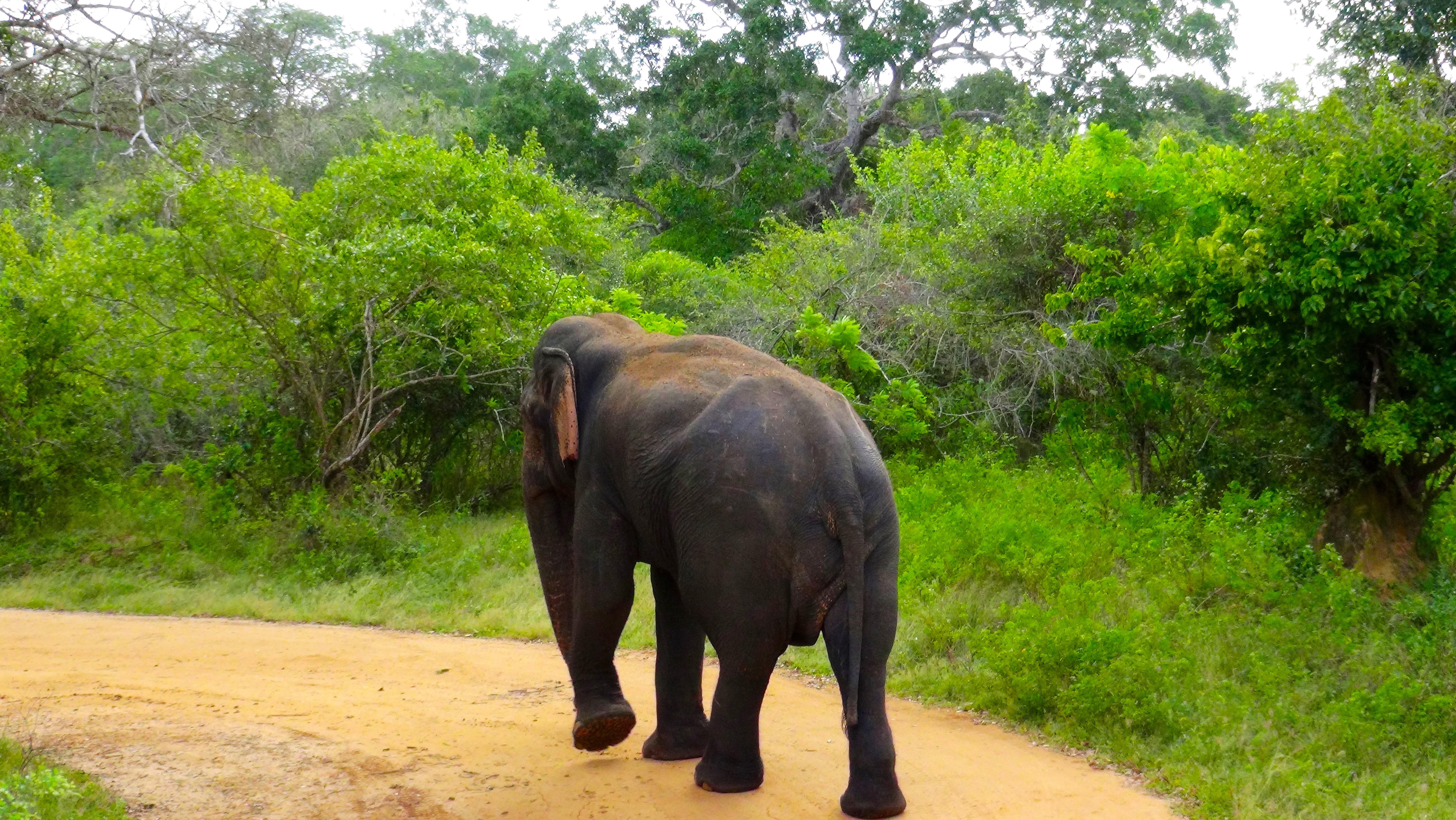 Il est finalement parti – Yala National Park