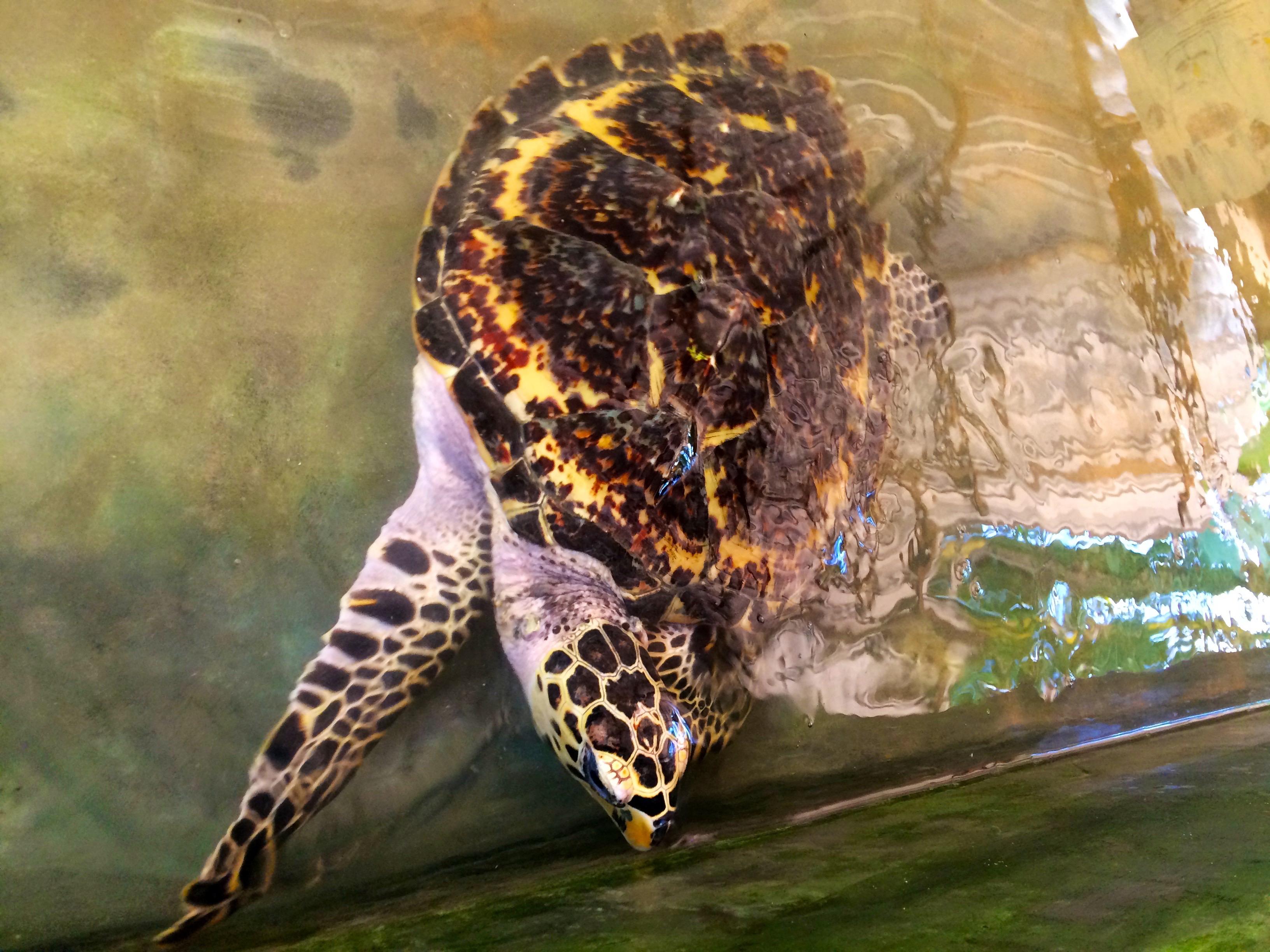 Turtle farm – Bentota