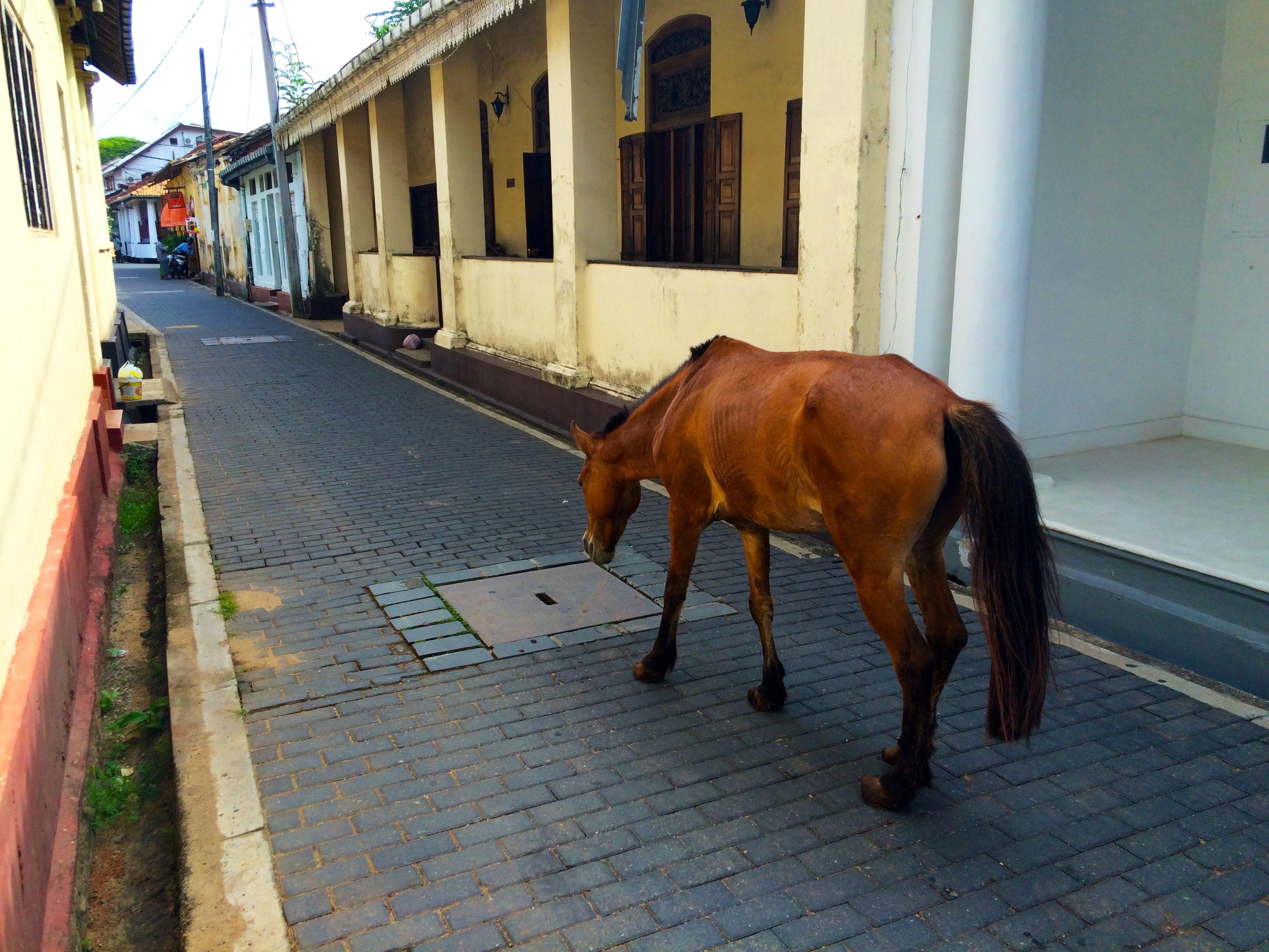 Un cheval au milieu de la route et ça n'inquiète personne