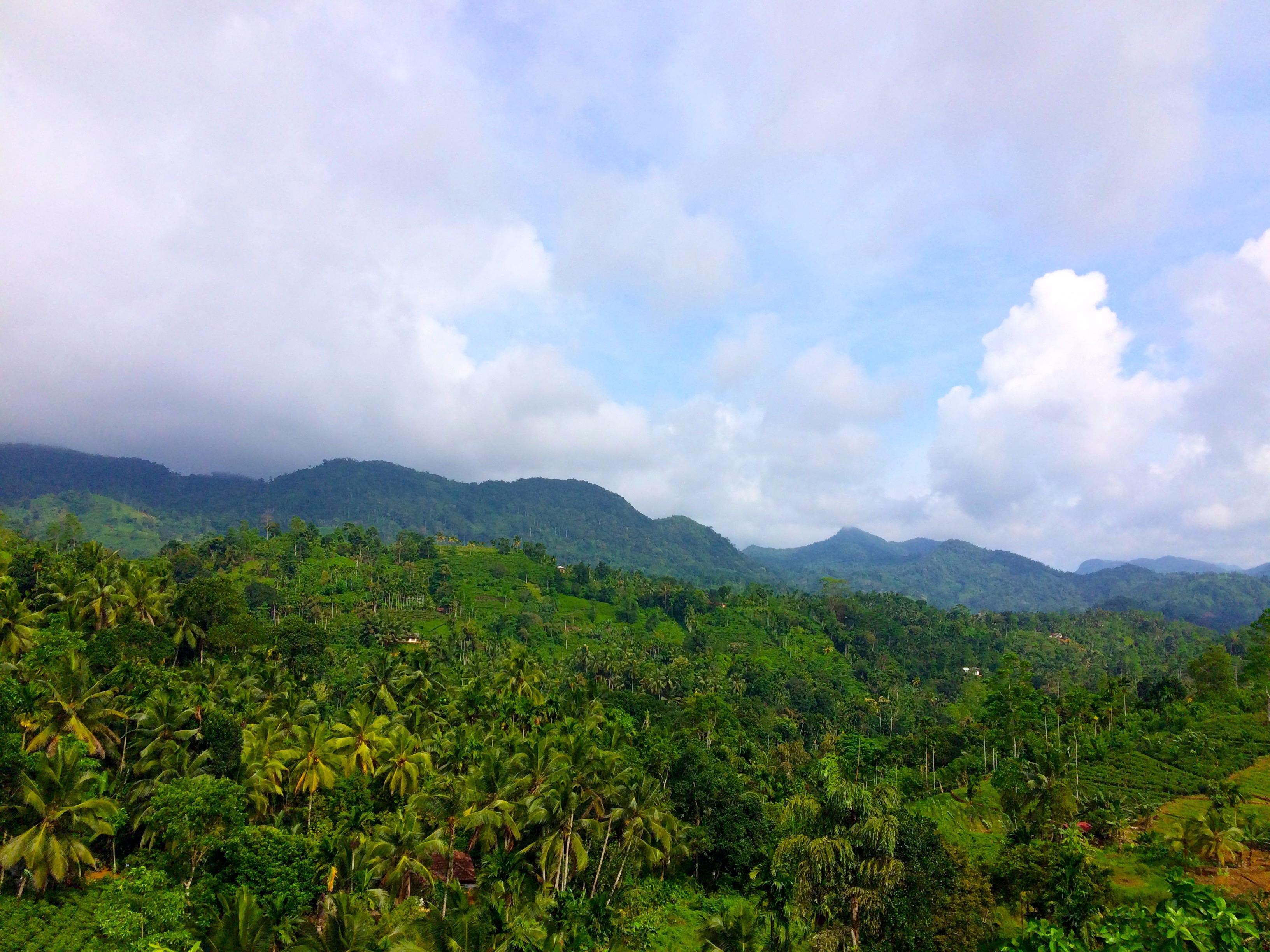 Vue sur la Rain Forest