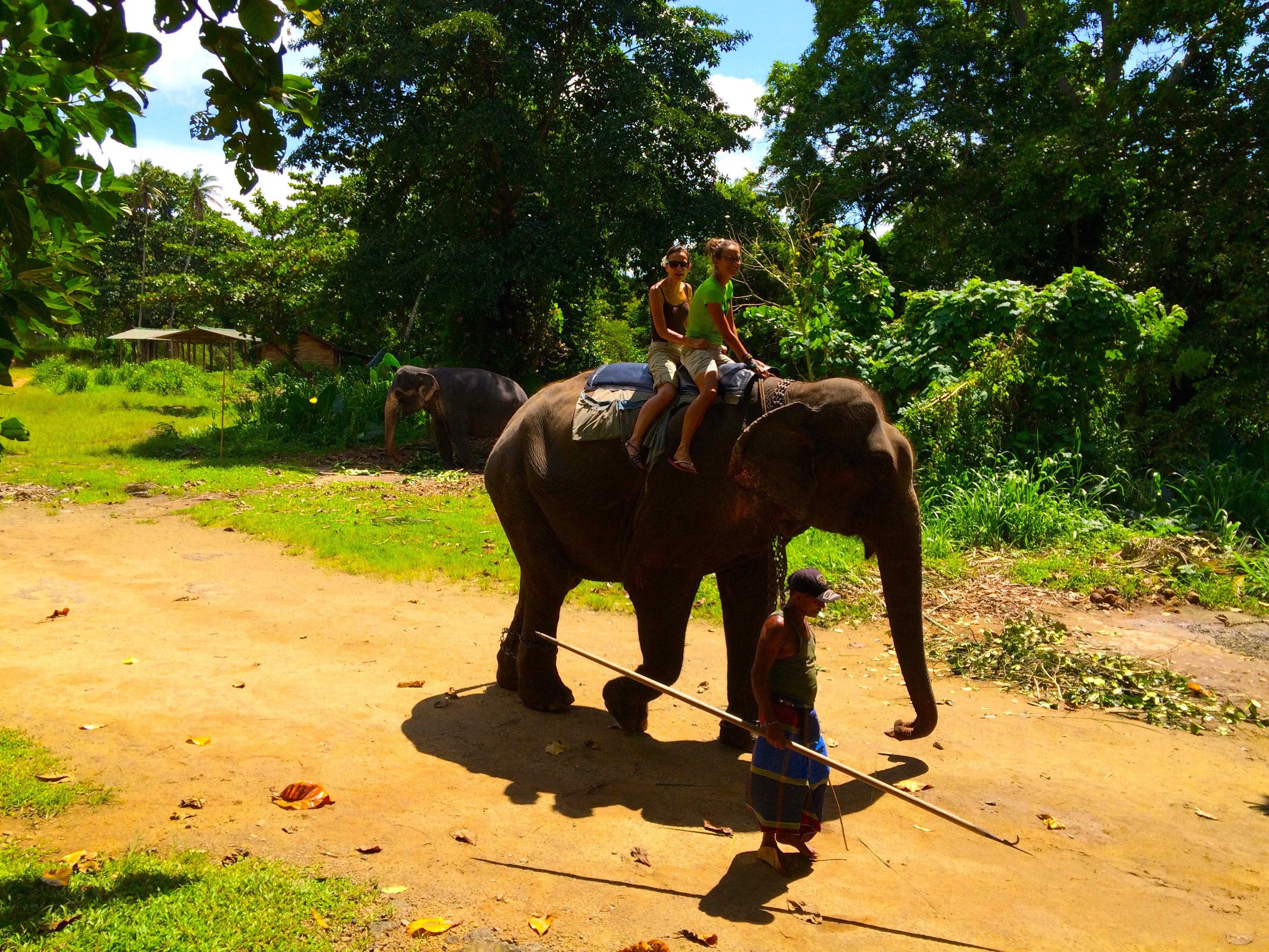 Monter sur un éléphant…